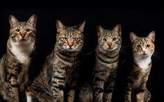 Media Tweets by Black Metal Cats (@evilbmcats)   Twitter