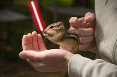 Chipmunk & the force?!