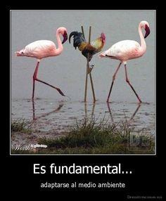 Es fundamental adaptarse... (verbos reflexivos)