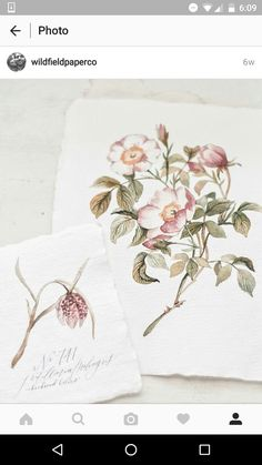 More beautiful botanical drawings from wildfield paper co