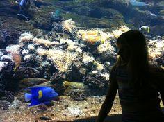 My angel - Yellowbar angelfish. Angelfish, Crete, Grand Canyon, Nature, People, Travel, Naturaleza, Viajes, Destinations