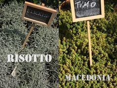 erbe aromatiche - aromatic herbs  elicriso, timo