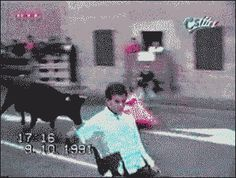 Bull Smack! [GIF]