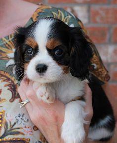 Precious pup!  I ❤️ tris! -jd