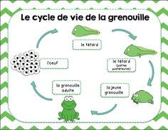 Ensemble d'activités sur les animaux/ French animals activity bundle