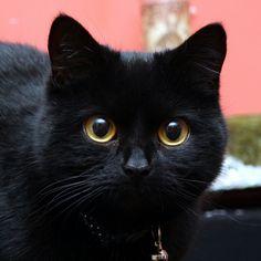 Pepper. I love the intelligent eyes, here.