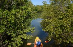 Oleta River State Park - Paddling on the calm waters of Biscayne Bay adjacent from the Haulover Inlet. Several routes to choose from that consist of open water and mangrove trails and the Oleta River.