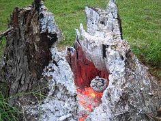 Burning Tree Stumps Phase VI. Backyard Tree Removal. Hot Dog Roast, Anyone?