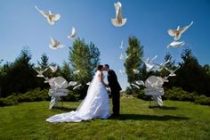 Releasing doves can be a gorgeous idea for your Wedding Ceremony! It's that touch of something special that every bride is looking to find!