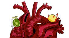 """Do you know which foods contain good cholesterol, and which contain bad cholesterol? If you think you do, ha! That's a trick question! Cholesterol in our food doesn't come in """"good"""" and """"bad"""" varieties, but cholesterol readings from blood tests do, and the two aren't as closely connected as we used to think."""