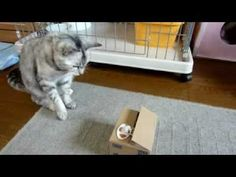 real cat vs fake cat... guess who wins!