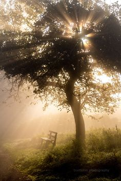 Photo The Morning Bench 2 by Sascha Böttcher on 500px