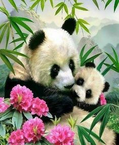 Panda Bear, Painting, Type 3, Theater, Art Ideas, Facebook, Diamond, Pandas, Pictures