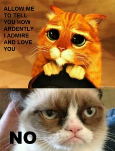 """Grumpy Cat may now be my favorite actress to play Jane Austen's Elizabeth Bennet in """"Pride and Prejudice."""" Puss and Boots is also a good Mr. Darcy. LOL!"""
