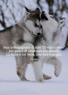 Do ot be ashamned to say 'I love you.' Strength is in the good, not in pride Peace Quotes, Wise Quotes, Inspirational Quotes, Dog Phrases, Intelligent Words, Fantasy Magic, Dances With Wolves, Important Quotes, Afrikaans Quotes