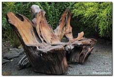 beautiful driftwood bench