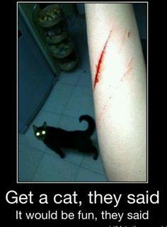 Reasons I hate cats.... ugh