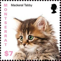 Montserrat Kittens  On 7 November 2013 Montserrat issues a set of stamps showing kittens of unspecified breeds. http://www.catstamps.org/