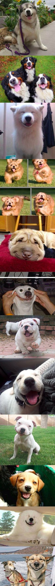 Everyone needs a smile on their face right about now, and these dogs should do the trick.