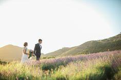 romance in lavender fields
