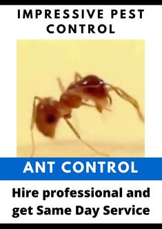Household Pests, How To Get Rid, Pest Control, Ants, Brisbane, Day, Ant, Bed Bugs Treatment
