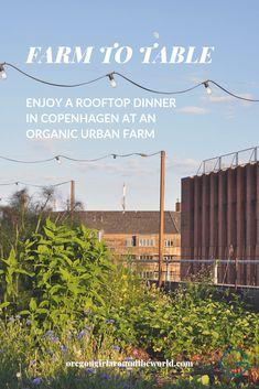 Organic Farm to Table Fare on a Rooftop in Copenhagen Capital Of Denmark, Like A Local, Travel Articles, Urban Farming, Organic Farming, Summer Nights, Beautiful Gardens, Rooftop, Copenhagen