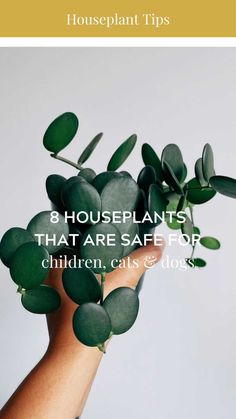 ashleyrose on Instagram: 🌿 8 Houseplants That are Safe for Children, Cats and Dogs: ⠀⠀⠀⠀⠀⠀⠀⠀⠀ Zebra Haworthia Chinese Money Plant Spider Plant Donkey Tail Blue… Cat Safe House Plants, Types Of Houseplants, Plant Pests, Chinese Money Plant, House Plant Care, Spider Plants, Pest Control, Lawn And Garden, Dog Cat