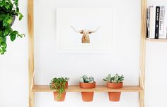 A Planter Shelf DIY
