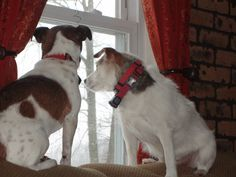 Abby and Bandit Pets, Animals, Animales, Animaux, Animal, Animais, Animals And Pets