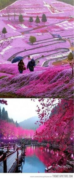 Beautiful Fields in Hillside Hokkaido, Japan This is Amazing!