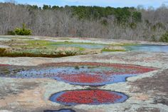 The One Place In South Carolina That Must Be Seen To Be Believed