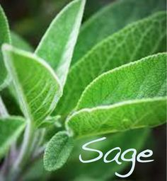 Sage in Magic