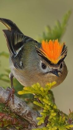 Exotic pets 395824254750912803 - Source by Funny Birds, Cute Birds, Pretty Birds, Small Birds, Little Birds, Colorful Birds, Beautiful Birds, Animals Beautiful, Beautiful Pictures