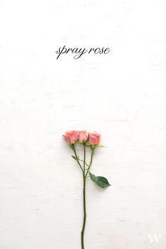 Weddingstar Spring Floral Guide