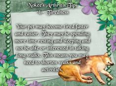 Nokee's Arthritis Tip #6- Tiredness Your pet may become tired faster and easier. They may be spending more time resting and sleeping and not be able or interested in taking long walks. This means you may need to shorten walks and activities.  #caninearthritis #dogs #arthritis #pets #caninehealth #arthritisindogs #pethealth #tiredness