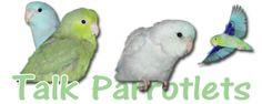 Tips: bringing home a new parrotlet - Talk Parrotlets Forums Cockatiel, Budgies, Pacific Parrotlet, Talking Parrots, Parrot Toys, Conure, Dog Care, Animals And Pets, Your Pet