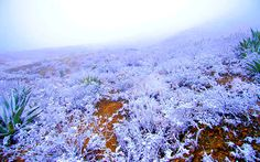 El campo congelado de Saltillo. Mountains, Nature, Travel, Country, Naturaleza, Viajes, Destinations, Traveling, Trips