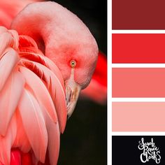 Flamingo colors! | 25 color palettes inspired by the PANTONE color trend predictions for Spring 2018 - Use these color schemes as inspiration for your next colorful project! Check out more color schemes at www.sarahrenaeclark.com #color #colorpalette