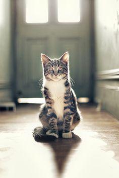 Hall cat.