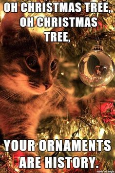 Funny Animal Pics For Your Wednesday Ornament Funny Animal - 18 times tumblr told absolute hilarious truth animals