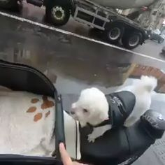 Riding partner 😅😋😋 - Tiere - The Effective Pictures We Offer You About pets preschool theme A quality picture can tell you many - Funny Animal Videos, Cute Funny Animals, Animal Memes, Cute Baby Animals, Funny Dogs, Animals And Pets, Animal Humor, Dog Videos, Cute Puppies