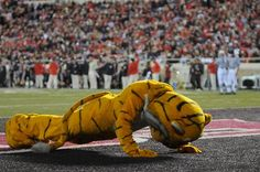University of Missouri mascot Truman the Tiger does push-ups after each Mizzou score.
