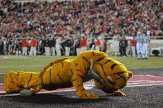 University of Missouri mascot Truman the Tiger does push-ups after each Mizzou score. Boone County, Stl Cardinals, Missouri Tigers, Live Animals, Ole Miss, Lsu, Push Up, Dinosaur Stuffed Animal, Happy Birthday