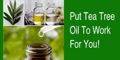 SHARING IS CARING!45811000Do You Know These 25 Tea Tree Oil Tricks? Tea Tree Oil's main use and value is in its ability to kill many types of microbes such as bacteria, viruses and fungus.  This is true when applied to any surface including garbage pails, counter tops as an all purpose cleanser and even to …