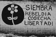 ❥Alegoría de la prudencia🌵 Protest Art, Protest Signs, Arte Punk, Street Quotes, Mexican Graphic Design, Free Mind, Words Quotes, Sayings, Feminist Art