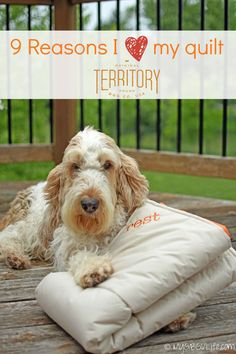 My GBGV Life | I love my reversible comforter from @origterritory allergen free, machine washable, just perfect for any dog!