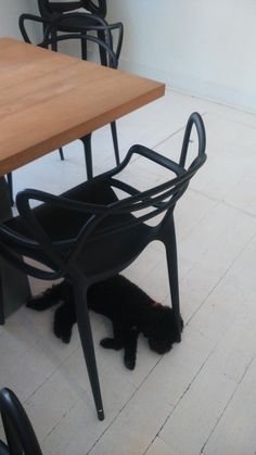 """""""Winnie is totally engaged in this afternoon's meeting Office Dog, Black Art, Advertising, London, Creative, Decor, Big Ben London, Decorating, Commercial Music"""