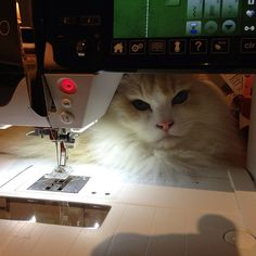 Sewing with cats. #berninausa   Another Watchcat.  When I beaded at a friend's house years ago, her cat kept a close eye on what I was doing by sitting just beyond my beading mat.