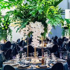 Instagram media by jasonjamesdesign - EVENT .  The view from within our Fairytale Forest. We created a series of round guests tables with gold stands and individually designed floral installations. The floral for each table was individually designed and adorned with sculptural foliage, thousands of floating phalaenopsis orchids, roses and hydrangeas.  Event design and styling by #jasonjamesdesign Incredible florals @seedflora Custom made stands @eventsbynadia  Photography @siempreweddings