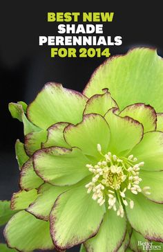 Shade-loving perennial flowers. Here are some of our top picks for 2014.